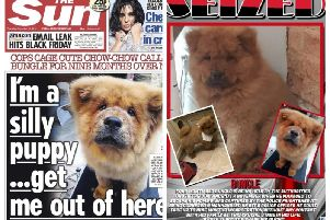 Bungle's story is front page news and a campaign to free him has gathered thousands of supporters