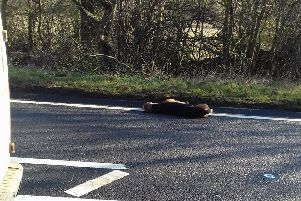 A passing motorist took this picture of the hound at the side of the busy road.