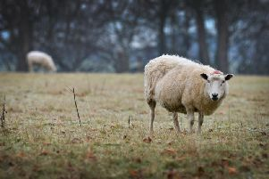 Northamptonshire police has recently launched a new rural crime strategy to tackle issues such as sheep rustling.