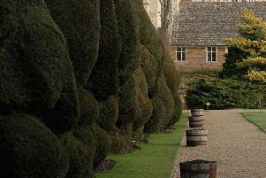 The Yew Hedge at Rockingham Castle