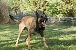 Owners have a duty of care to ensure that their dog is kept under control