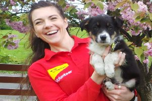 Dogs Trust Ballymena to hold fostering and volunteer recruitment event on Sunday.