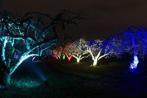 Long Meadow Farm will be shown in a new light with the staging of a treelumination event from February 13 to 16. Lighting, design and photography is by Walter Holt.