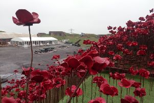 Poppies at Fort Nelson. Picture: David George