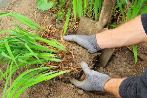Re-planting your perennial plants is an essential job to be completed at this time of year.