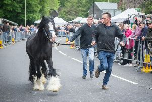A horse owner running with his horse down The Square, Wickham. Picture: Habibur Rahman
