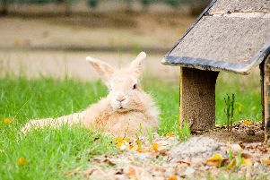 Rabbits make great pets, but can you compost their droppings? Picture: Shutterstock