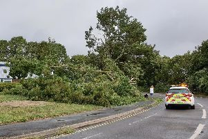 A fallen tree in Salterns Lane. Photo: Rene Hinton