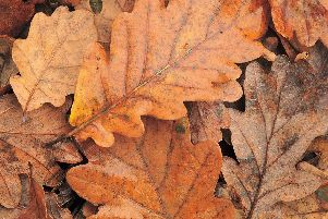 Fallen leaves in the street can be collected and turned into leaf mould.
