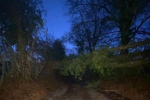 Damson Hill in Bishops Waltham is closed after a tree fell down''Pic: Hants police