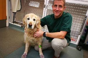 Pember, who was successfully treated by Avonvale Vets for seasonal canine illness, with clinical director Simon Davies.