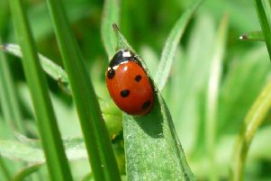 Swarms of ladybirds have been spotted around Sussex today