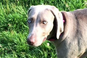 Mitzee tragically had to be put to sleep after vets suspected she had contracted the deadly disease Alabama Rot SUS-191127-104305001