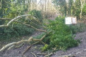 A Steyning Downland Scheme information board was damaged when one large ash tree fell. Picture: John Burgess