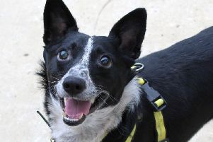 Dogs Trust Shoreham dog of the week Marcus