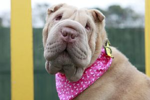Two-year-old Polly has stolen the hearts of staff and volunteers at Dogs Trust Shoreham