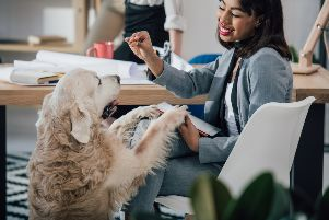 Would an office dog make your workplace better? 1.7 million businesses are OK with it