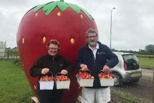Visitors to the Chapel St Leonards area are always pleased to see the giant strawberry sign go out at the Farm Shop on the main coast road. Diane and Mick Clarke travelled all the way from Boston to pick 12 kilos to make jam.