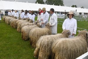 Lincolnshire Show. Lincoln Longwool judging EMN-201102-093011001