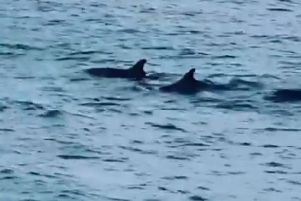 Dolphins were seen off the coast in Newhaven, still from video shared by Shoreham Port SUS-190304-114207001