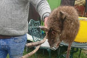 A two-foot long rat has been discovered in Worthing. Picture: Ash Hammond