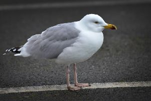 A large numbers of seagulls frequent the area