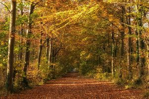 Friston Forest in Sussex, by Sam Moore