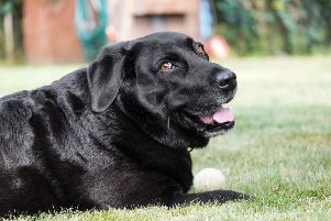 A burger wrapper was found in the spot the Labrador was last seen in