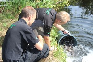 Chub released in River Thame