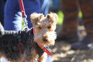 FARMING MATTERS: NFU's autumn dog walking plea