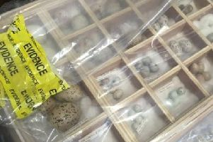 Police found thousands of eggs at Lingham's home stored in chests and wardrobes. Credit: RSPB