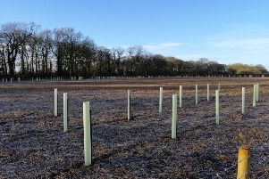 The trees have been planted on land off Rouncil Lane