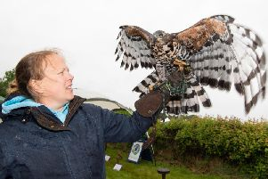 Charlotte Hill from CJ's Birds of Pray is pictured with her African Crowned Hawk Eagle. Photo submitted