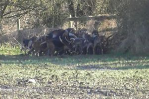 Scenes from the Warwickshire Hunt on Wednesday, January 15.