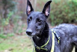 Dogs Trust Shoreham dog of the week Ace is looking for a home