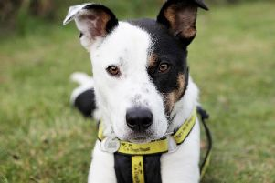 Dogs Trust Shoreham dog of the week Yoda
