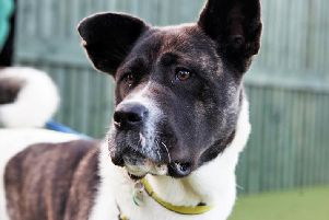 Dogs Trust Shoreham dog of the week Ruthie