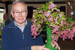 Paul Rayner with his lovely pink pieris japonica, awarded the trophy for best exhibit. Photo by Derek Martin DM1931691a