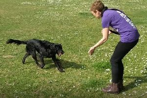 Bella showing off her retrieving skills
