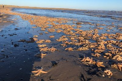 Warning after dog dies eating 'dead fish on beach