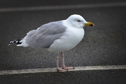 File photo: Seagull SUS-190129-143317001
