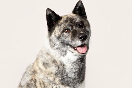 Kiwi the rescue dog will feature on the 2020 calendar, photo by Rachel Oates