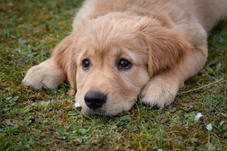 Dog owners are being urged to look out for signs of the deadly disease Alabama Rot in their pets SUS-191120-102617001
