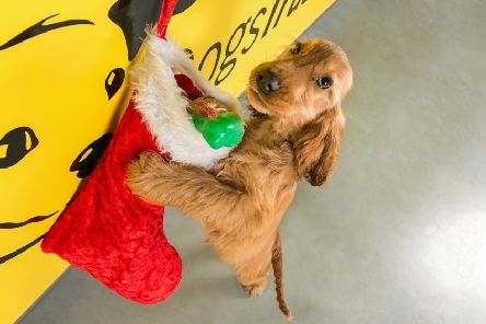 This year's Dogs Trust Christmas Fair will take place at the Ballymena Rehoming Centre on Saturday, November 30, between 11am-3pm