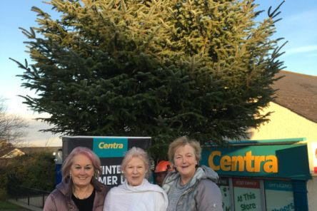 Members of the Culmore Tourism and Craft Collective at the site the new tree.