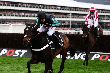 Altior is on course for the Champion Chase at Cheltenham