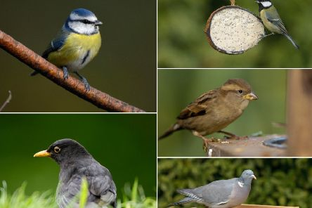 RSPB Big Garden Birdwatch 2019