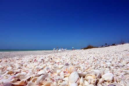 The beaches on Sanibel and Cayo Costa are super for shelling