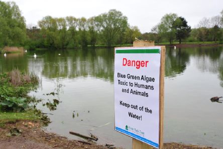 A veterinary group has issued a warning following a suspected fatal case of exposure to blue-green algae