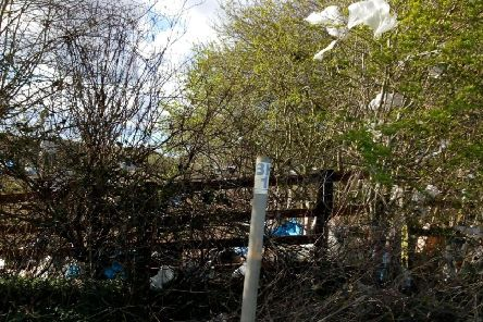Plastic bags in trees and hedges neighbouring the Kirkby Gravel Pits nature reserve and Kirkby on Bain Household Waste Recycling Centre.